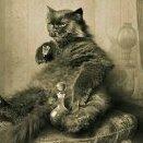 cat_Begemot